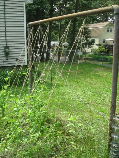 Exceptional Simple And Cheap DIY Garden Trellis | Ourheritageofhealth.com