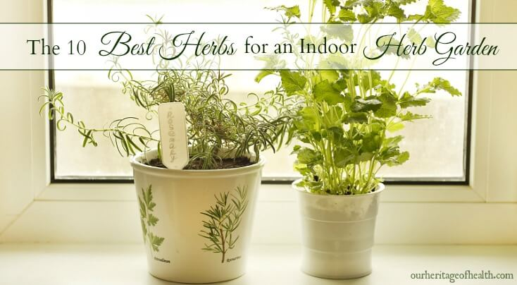 These 10 easy-to-grow herbs are perfect for an indoor herb garden so you can have fresh herbs all year long!