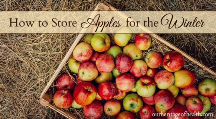 How to store apples properly so they last for the winter months.