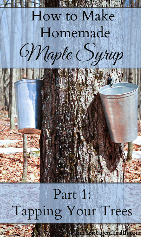 How to make homemade maple syrup: tapping your maple trees