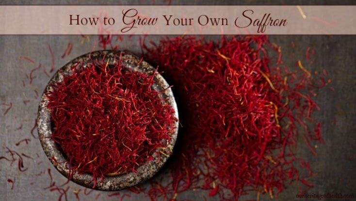 how to grow your own saffron
